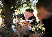 Garrett Diaz, center, and his brother Connor, right, attempt to cut down a Christmas tree after finding the perfect one at the Thompson Tree Farm in Lawrenceville. The Diaz family has made a tradition of finding a Christmas tree by coming to the tree farm for the past 11 years. (Staff Photo: David Welker)