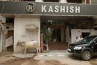 Vache et 4X4 dans le quartier de Pahar Ganj a New Delhi. A holy cow and a SUV in the Pahar Ganj district of New Delhi.