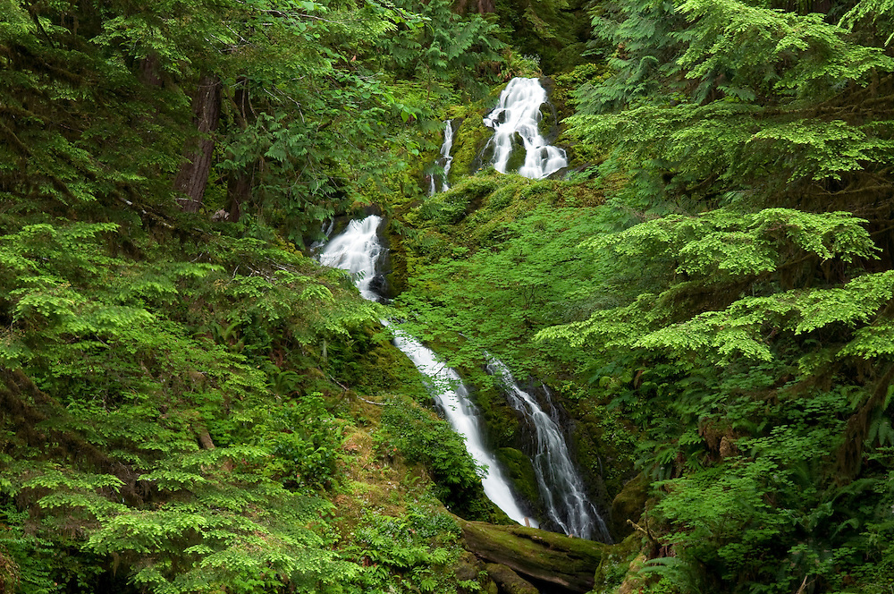 Bunch Falls, Quinault River Area, Olympic National Park, Washington.