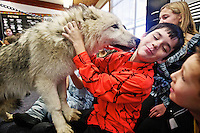 Garrett Ashby gets up close and personal with one of two juvenile Arctic wolves during a class presentation.