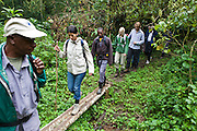 A group of international travellers trekking the Bitukura group of Mountain Gorilla in Bwindi Impenetrable Forest, South Western Uganda.