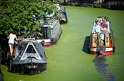 © Licensed to London News Pictures. 24/07/2018. London, UK. A canalboat makes it's way through a sea of algae on the canal networks of Little Venice in central London, as warm temperatures in the capital continue. Forecasters are predicting record temperatures later this week. Photo credit: Ben Cawthra/LNP