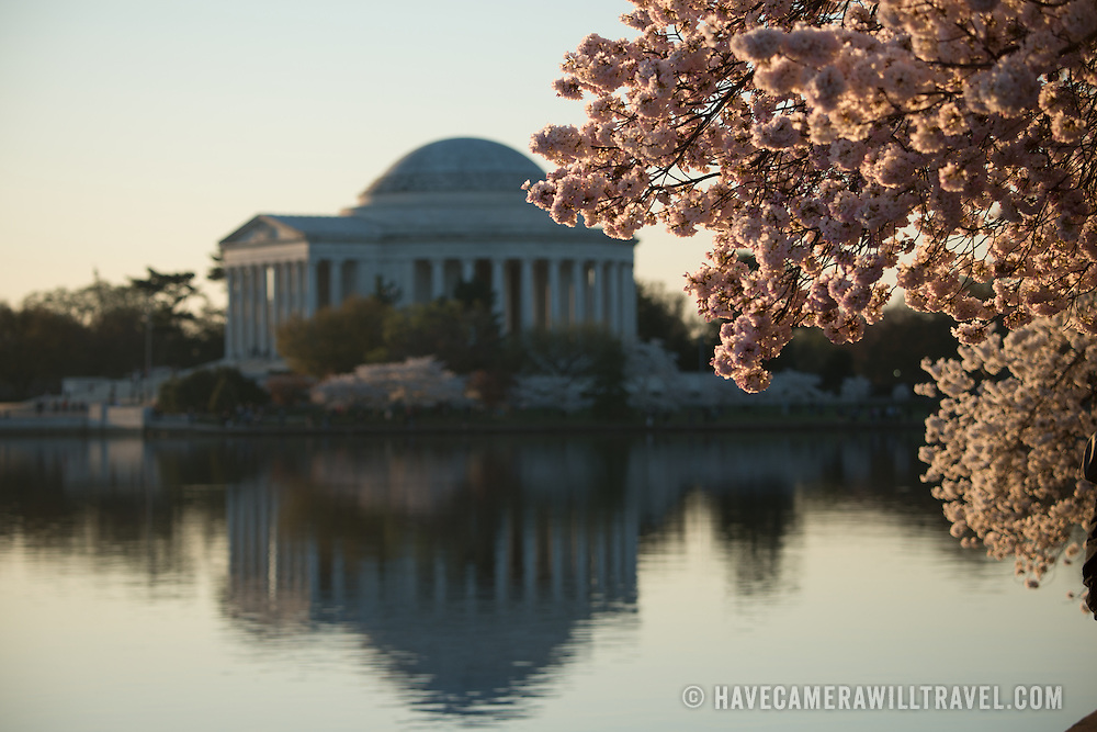 The Jefferson Memorial in the background, with cherry blossoms in the foreground.