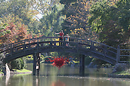 Woman stands on bridge over pond and Chihuly glass sculpture in Japanese Garden at Missouri Botanical Garden; St. Louis, Missouri.