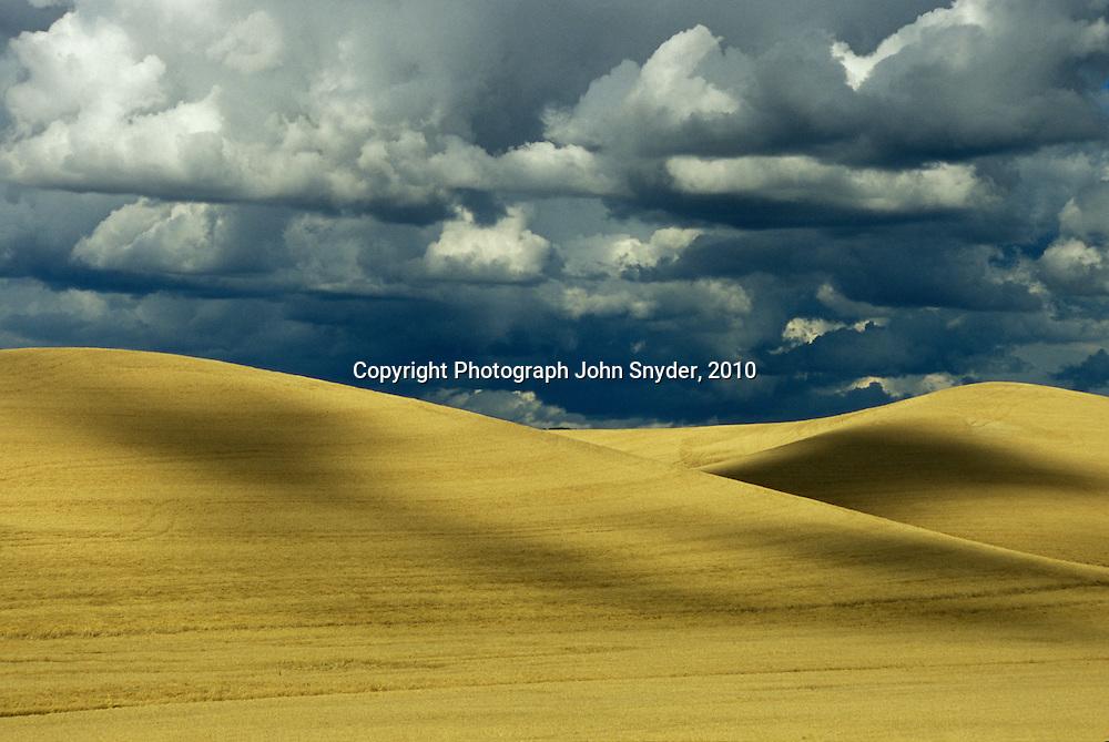 Golden wheat fields await harvest under heavy summer clouds near Moscow, Idaho. The Palouse