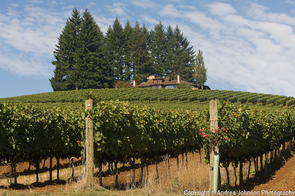 Vineyards surrounding Dick Erath's House, Dundee Hills, Willamette Valley, Oregon