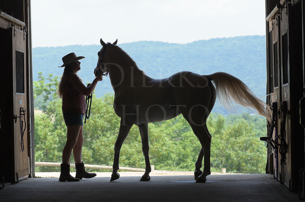 I've always enjoyed shooting these barn door silhouettes of horse and rider at a nearby riding stable. The door at the end of the barn is large enough and acts as a stage of sorts, and opens onto the classic mountains of rolling Pennsylvania farm country landscape laid out beyond. Usually, just asking the person to move the horse around or perform a simple equine task such as saddling the horse or put on a halter is enough to generate interesting images. Being shot in silhouette, the impact and story are much stronger. Many of these have been licensed to publication and advertising.<br />
