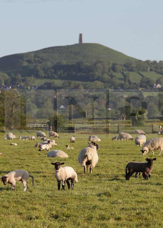 © Licensed to London News Pictures. 20/05/2015. Glastonbury, UK. Glastonbury Tor in early morning light this morning, 20th May 2015. The day has started off clear, with early morning temperatures near freezing in places in the south west of England. Photo credit : Rob Arnold/LNP