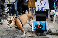 """© Licensed to London News Pictures. 07/10/2018. London, UK. Dogs make use of a pee station adorned with an image of Boris Johnson during the 'Wooferendum' march and rally to Parliament Square to demand a """"People's Vote"""" on the final Brexit agreement.  Photo credit: Peter Macdiarmid/LNP"""