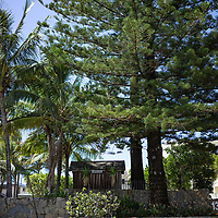 green pine trees near the beach in summer