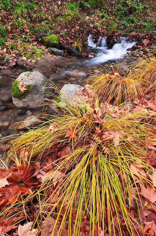 Fall on the Nacimiento River, Los Padres National Forest, California