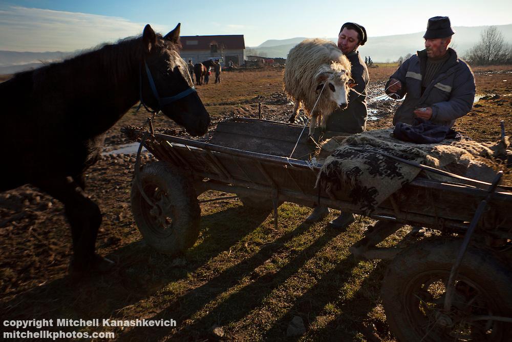 Rural Romanian man buys a sheep.  Maramures, Romania