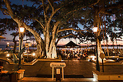Banyan tree and lanai Beach Bar at the Moana hotel in Waikiki Beach, Hawaii