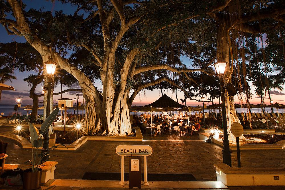 Banyan tree and lanai Beach Bar at the Moana hotel in Waikiki Beach, Hawaii