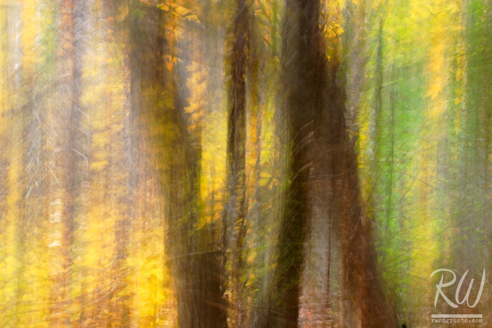 Oak Tree Forest Photo Impressionism, Big Dalton Canyon Wilderness Park, Glendora, California