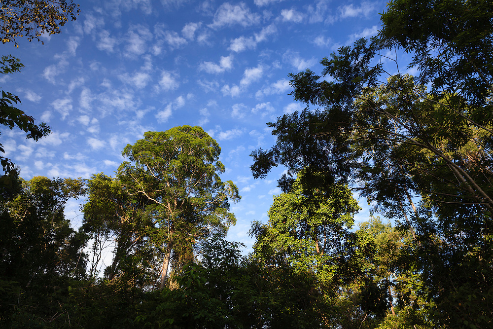 Rainforest landscape. Cat Tien National Park. Vietnam.