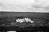 Bags of reshly cut peat bogs on a stretch of land on the island of Lewis in the Outer Hebrides, Scotland. Peat cutting was a traditional method of gathering fuel for the winter in the sparsely-populated areas on Scotland's west coast and islands. The peat was dried and used in fires and ovens.