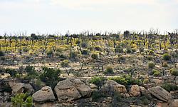 Chapin Mesa, Mesa Verde National Park, Colorado, USA