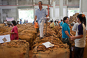 09 APRIL 2010 - DON NANG HANG, NAKHON PHANOM, THAILAND: A worker walks across bags of tobacco in the warehouse. Thai tobacco farmers have their crop graded and priced before they sell it at the Thai government tobacco warehouse in Don Nang Hang village in Nakhon Phanom province. The region, in northeast Thailand, is the center of the Thai tobacco industry.  PHOTO BY JACK KURTZ