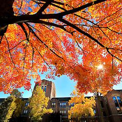 CMU Campus Scenics