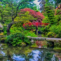 Asian Gardens-22