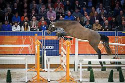 199 - Gazquine Tag<br /> KWPN Stallion Selection - 's Hertogenbosch 2014<br /> © Dirk Caremans