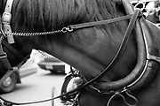 This is the neck of one of the many horses that line up and down Central Park South.  Taking a carriage ride through Central Park is one of the top tourist attraction in New York City.