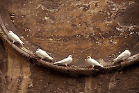 White doves sitting on a ledge in Valencia, Spain - photograph by Owen Franken