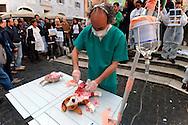 Roma 16 Maggio 2012  .Giornata nazionale di protesta organizzata da Occupy Green Hill, contro la vivisezione e per la chiusura di Green Hill. Un manifestante simula un intervento su un cane