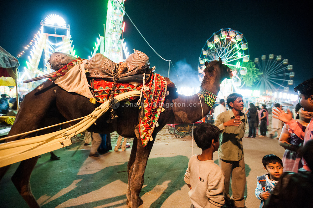 Camel pulling a cart in front of ferris wheels at night in Pushkar, India.
