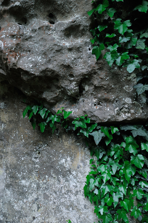 Sandstone and Common Ivy (Hedera helix), Mullerthal trail, Mullerthal, Luxembourg