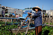 A woman waits for clients at the water's edge in Chau Doc, Vietnam. She takes people across the Bassac River in a wooden boat.  The river banks are lined with water hyacinth.  This invasive species is has become a serious problem in this area.  While locals harvest the plant for handicrafts and other uses, they cannot keep up with its growing coverage of the waterway.