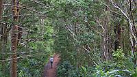 Woman walking on a walking track, Norfolk Island National Park, Norfolk Island, Australia