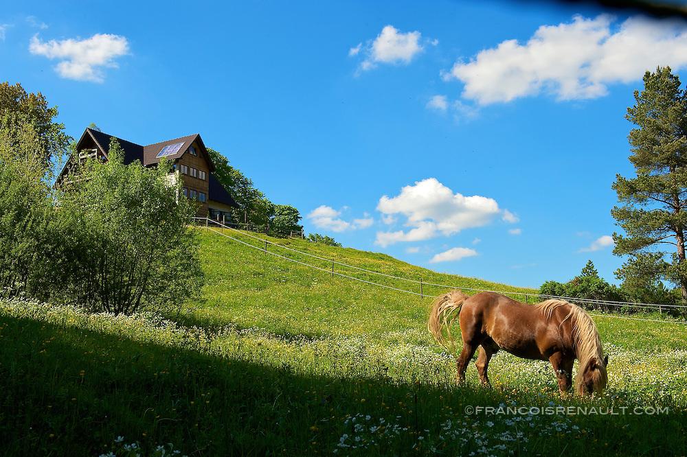 Landscapes of Black Forest, Germany. Paysages de la Foret Noire, Allemagne