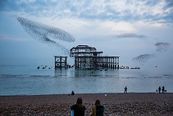 © Licensed to London News Pictures. 03/11/2017. Brighton, UK. A murmuration of thousands of Starlings as the sun sets over Brighton and Hove's West Pier, Today 3rd November 2017. Photo credit: Hugo Michiels/LNP