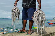 Local squid catch<br /> Biak Island<br /> West Papua<br /> Indonesia