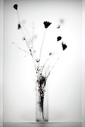 silhouette of wilted wild flower bouquet