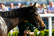Heartwarming ridden by Josephine Gordon and trained by Clive Cox  - Ryan Hiscott/JMP - 19/04/2019 - PR - Bath Racecourse- Bath, England - Race 5 - Good Friday Race Meeting at Bath Racecourse