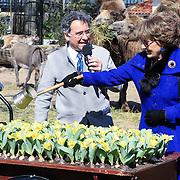 NLD/Amsterdam /20130327 - Prinses Magriet doop een tulp in Artis,  Prinses Margriet doopt de tulp