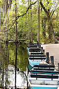 Rowboats at the blackwater bald cypress and tupelo swamp during spring at Cypress Garden April 9, 2014 in Moncks Corner, South Carolina.