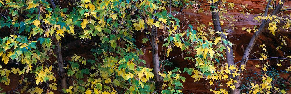 Fall leaves against Sandstone