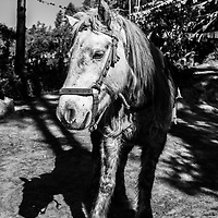 A horse waiting for hire in Bhutan.