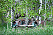 Aspens Reclaim Grove from 1963 Chevy