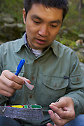 Chinese PhD student Guo Songtao with hair sample of Golden Snubnosed Monkey (Rhinopithecus roxellana qinlingensis), gathered with a lime stick for DNA analysis, Zhouzhi Nature Reserve, Shaanxi, China. Chinesischer Biologe und Doktorand Guo Songtao mit Haarprobe einer Goldstumpfnase für die DNA Analyse, Zhouzhi Naturschutzgebiet, Shaanxi, China.
