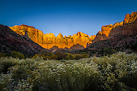 The Temples and Towers of Virgin in Utah's Zion National Park at sunrise.  The sandstone cliffs illuminate from the early morning sun and glow a bright orange.
