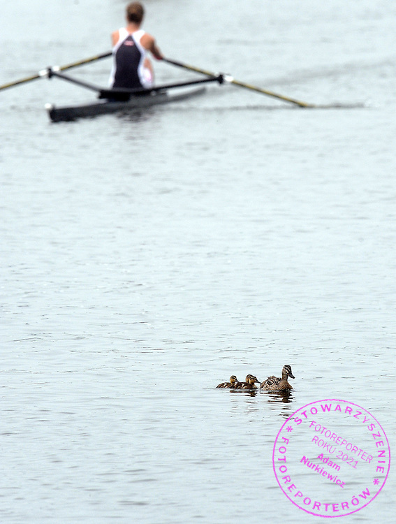 DUCK FAMILY DURING THE HENLEY ROYAL REGATTA. THE YEARLY ROWING EVENT IS HELD OVER FIVE DAYS ON THE RIVER THAMES AT HENLEY. CREWS RACE OVER A COURSE 1 MILE AND 550 YARDS LONG...HENLEY , GREAT BRITAIN , JULY 3, 2009..( PHOTO BY ADAM NURKIEWICZ / MEDIASPORT )..PICTURE ALSO AVAIBLE IN RAW OR TIFF FORMAT ON SPECIAL REQUEST.