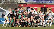 Twickenham, GREAT BRITAIN,  Quins Danny CARE, throwing out from the back of the scrum, during the Guinness Premiership match, Harlequins vs Worcester Warriors, played at the Twickenham Stoop on Sat. 16th Feb 2008.  [Mandatory Credit, Peter Spurrier/Intersport-images]