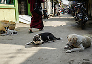 Three dogs rest in a narrow street of Mandalay, Myanmar.