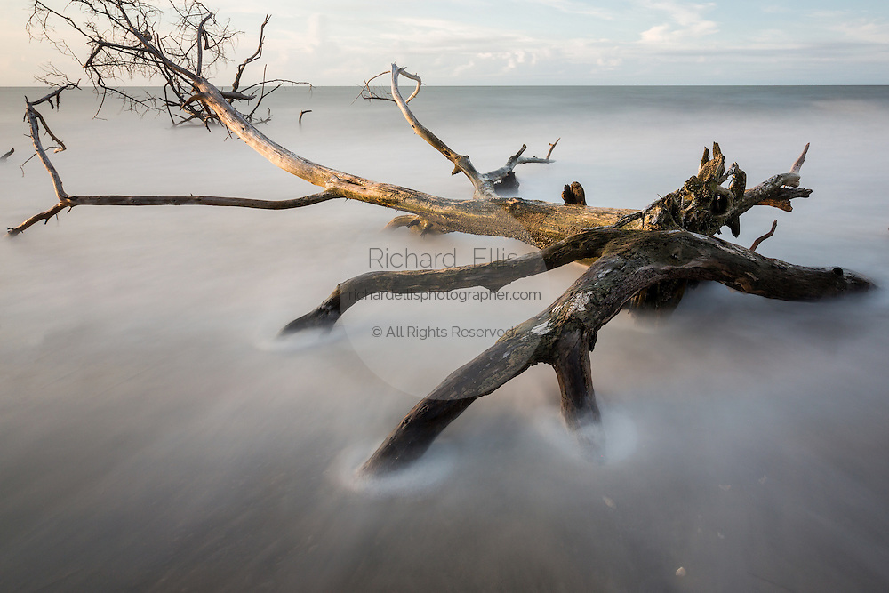 Dawn breaks over Boneyard Beach as the tide swirls around driftwood trees at Botany Bay Plantation July 3, 2016 in Edisto Island, South Carolina. Each year 144,000 cubic yards of sand is washed away with the waves at the beach and nearshore eroding the coastal forest along the beachfront.
