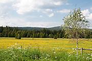 Landschaft Sumava Nationalpark, Böhmerwald, Tschechien | landscape Sumava national park, Bohemian Forest, Czech Republic